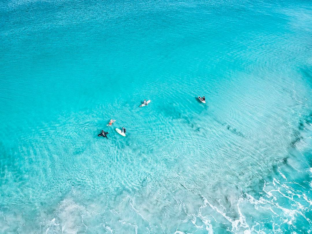 A group of people swimming in a body of water
